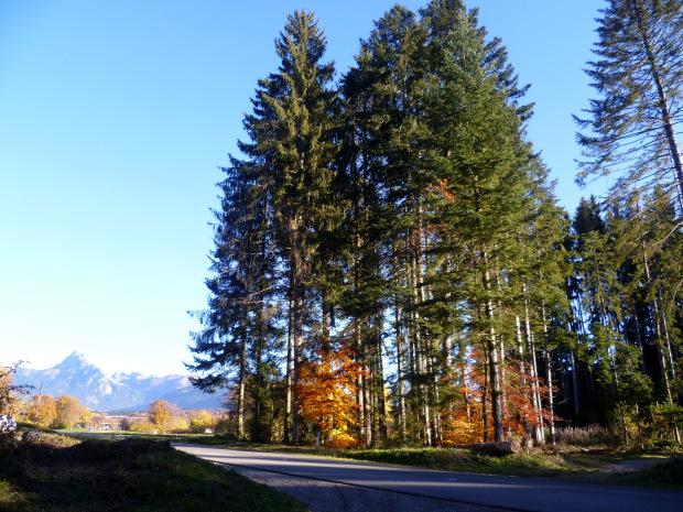 dimanche automne forêt